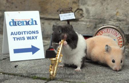 گروه جاز همستر ها