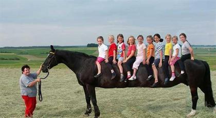 عکس دراز ترین اسب دنیا