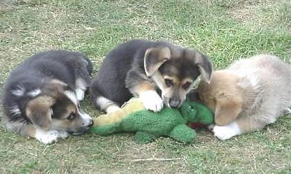 عروسک بازیه سگ توله ها