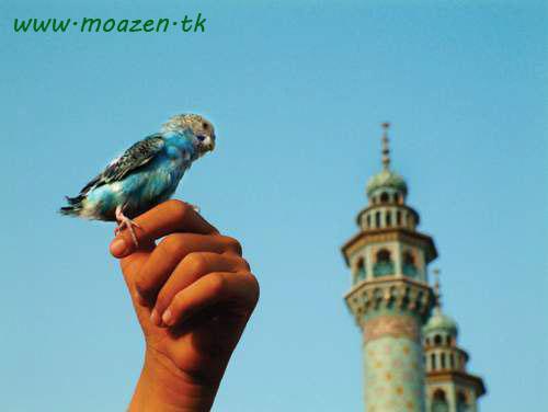 نواي اذان بانویی را مسلمان کرد