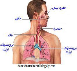 http://s1.picofile.com/1980/respirationsystem2.JPG