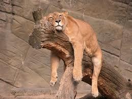 خسته خسته