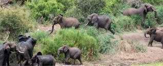 داستان واقعیه فیلی که حرف مامانیشو گوش نکرد