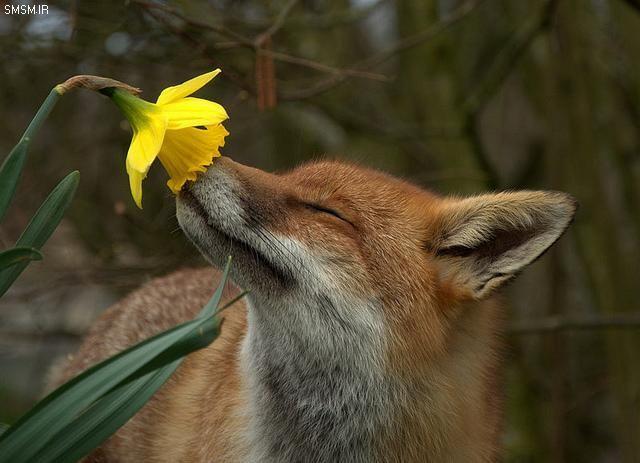 به به عجب بوی خوشی!