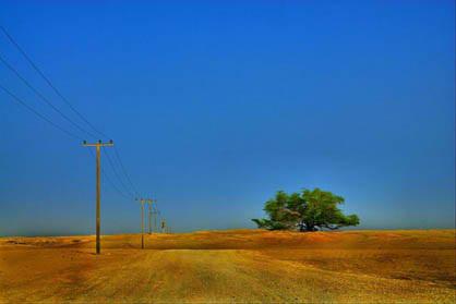 درخت زندگی در بهرین