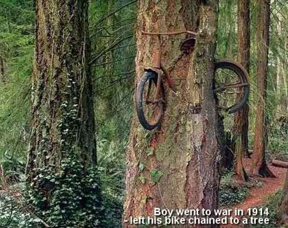 bike_and_the_tree.jpg