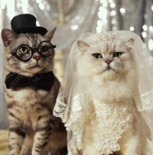 cute_cats_story_01.jpg