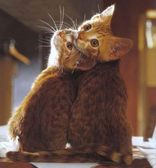cute_cats_story_02.jpg