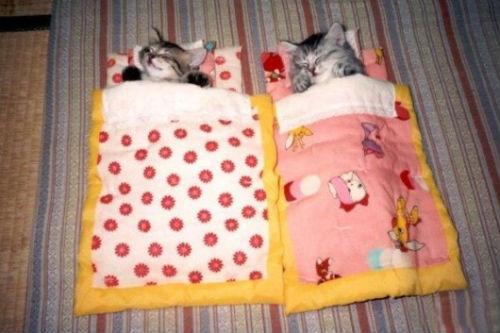 cute_cats_story_04.jpg