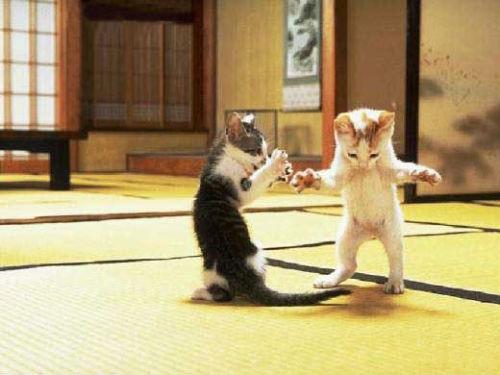 cute_cats_story_05.jpg