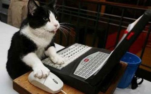 cute_cats_story_06.jpg