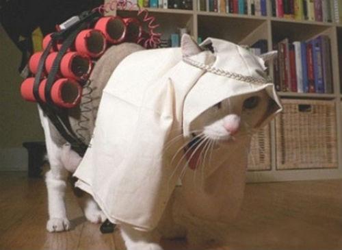 cute_cats_story_09.jpg
