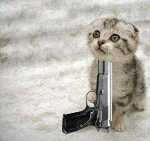 cute_cats_story_11.jpg