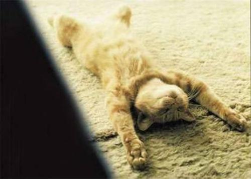 cute_cats_story_12.jpg