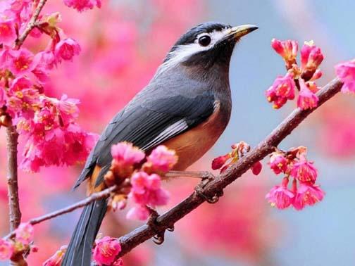 بهار قناری