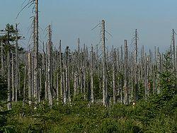 Acid rain woods1 باران اسیدی چیست؟ باران اسیدی