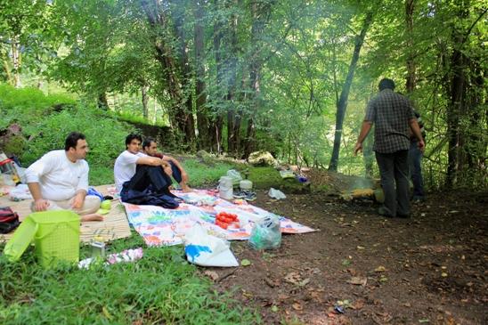 جنگل عباس آباد - جوجه