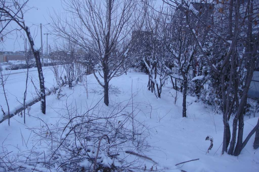 يك روز برفي