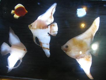 موزه آزادی ماهی