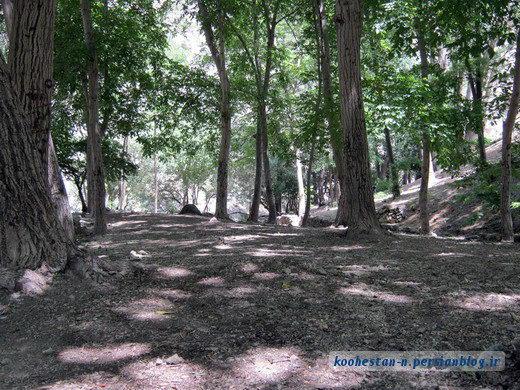 درکه-جنگل کارا