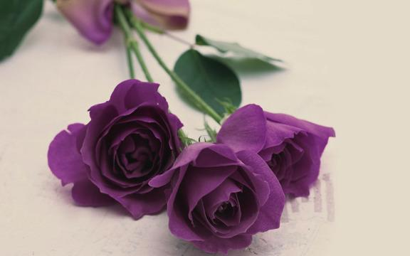 گل هایی برای جشن و هدیه