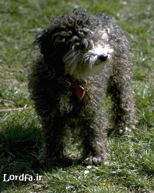 عکس نژادهای مختلف سگ