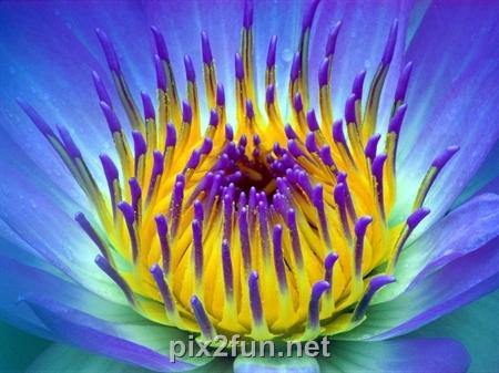5 عکسهای فوق العاده دیدنی از انواع گل