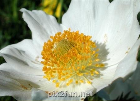 6 عکسهای فوق العاده دیدنی از انواع گل