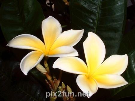 7 عکسهای فوق العاده دیدنی از انواع گل