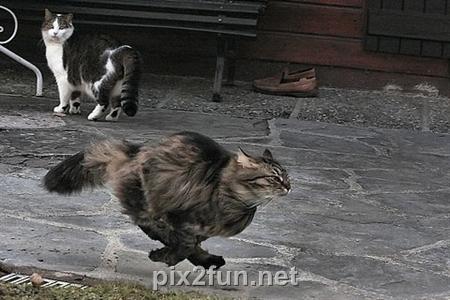 4153af30fea48749766949e0e567732b عکس گربه های هنرمند