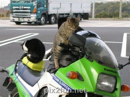 df39afed412b35da26517eb767015619 عکس گربه های هنرمند