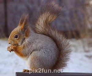 4 عکسهایی جالب از انواع سنجاب