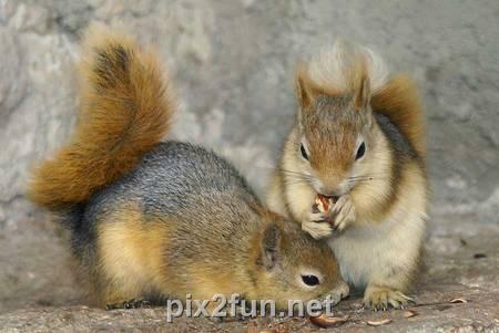 6 عکسهایی جالب از انواع سنجاب