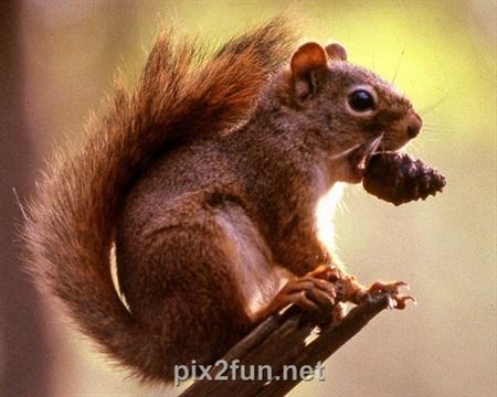 7 عکسهایی جالب از انواع سنجاب