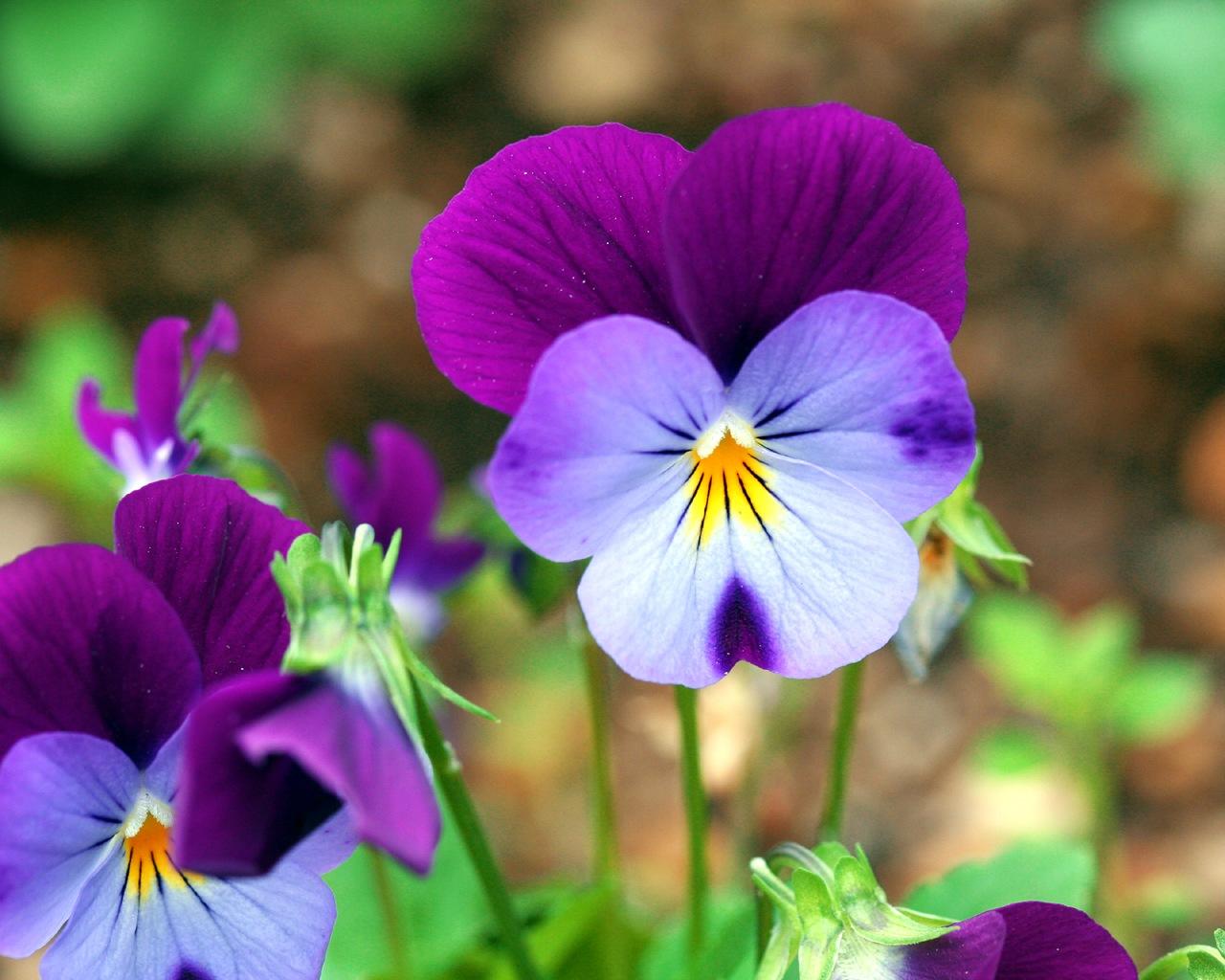 [عکس: _wallcoo_com_Flower_wallpaper_167.jpg]