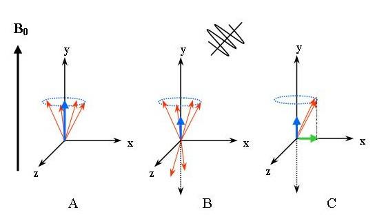 چگونگی قرار گرفتن اسپینهای هستهای در میدان مغناطیسی و نوسان با فرکانس لارمور