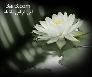 http://s1.picofile.com/file/7211104836/deylove.jpg