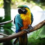 colorful gorgeous looks of parrot 1 طوطی های رنگارنگ و فوق العاده زیبا