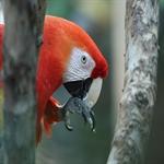 colorful gorgeous looks of parrot 13 طوطی های رنگارنگ و فوق العاده زیبا