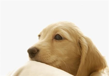 Dog9 12 عکس های دیدنی از سگ ها