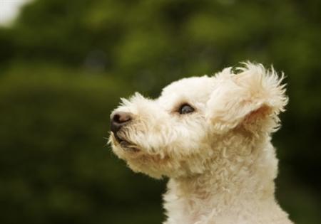 Dog9 17 عکس های دیدنی از سگ ها