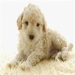Dog9 14 عکس های دیدنی از سگ ها