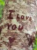 [تصویر:  lovetree_r7u4q55h.jpg]