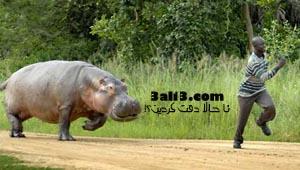 http://s1.picofile.com/file/7227412040/deghat.jpg