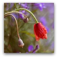 عکس های جدید از گل های زیبا     rojpix.com