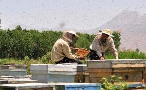 آموزش كامل پرورش زنبور عسل برای درامدزایی