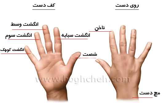 طراحی دست انسان