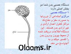 دستگاه عصبی مرکزی محیطی