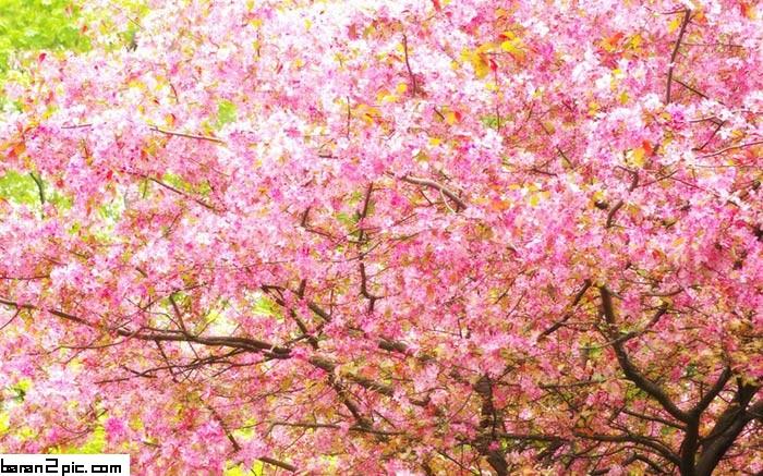 عکسهای زیبا از فصل بهار