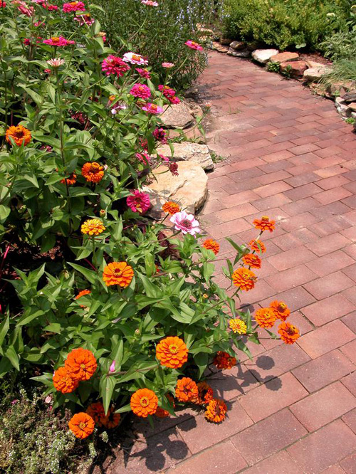 http://s1.picofile.com/file/7339540963/design_brickwalk_zinnias_lg.jpg